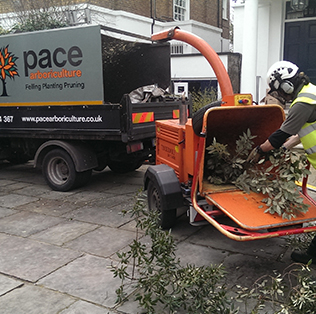 Tree Services in London