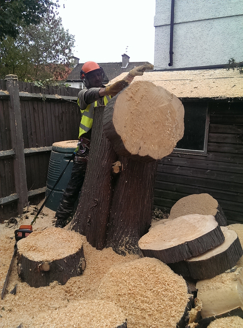 Tree Felling image