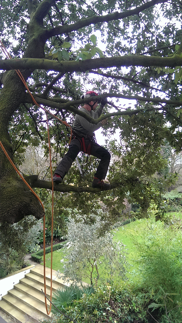 Pace Arboriculture employee at work