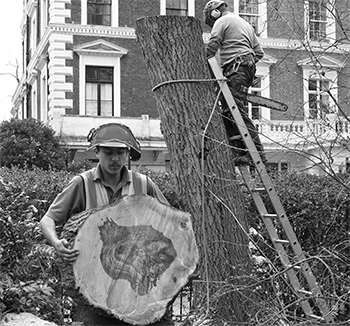 Tree services image